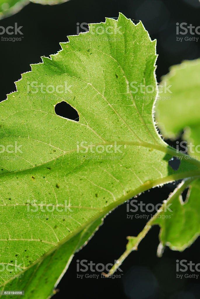 Zielony liść na tło  zbiór zdjęć royalty-free
