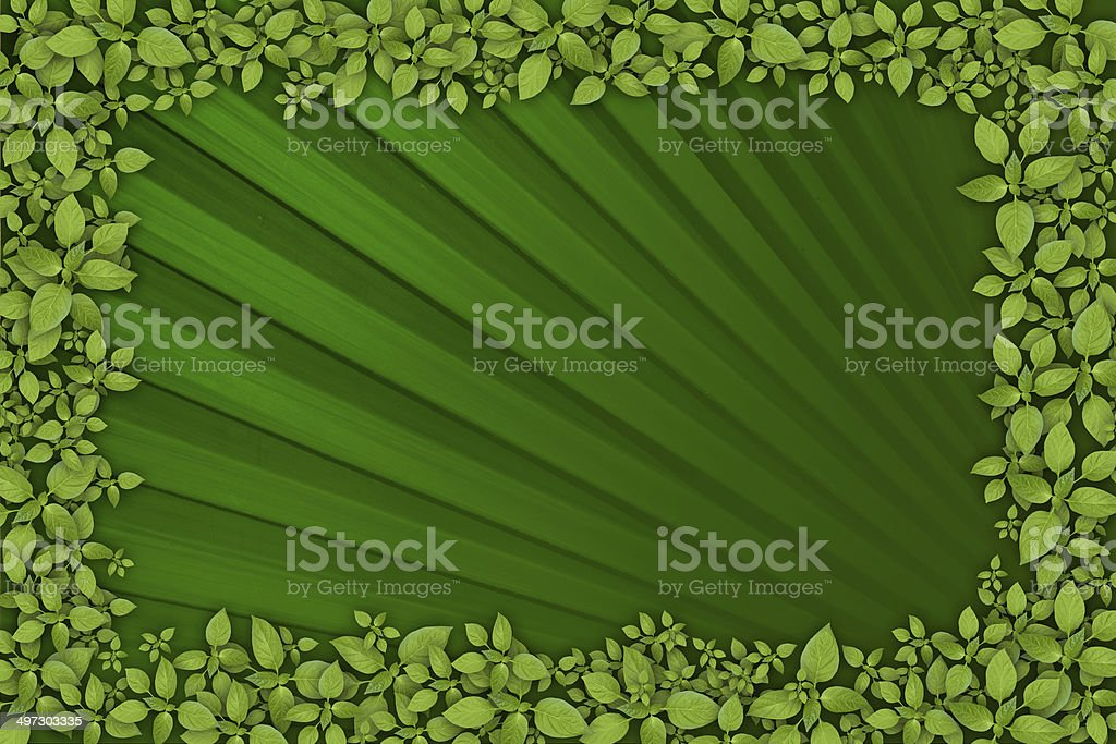 Green leaf background royalty-free stock photo