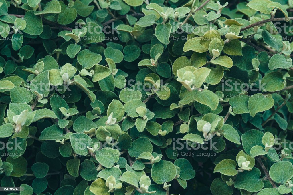Green leaf background. stock photo