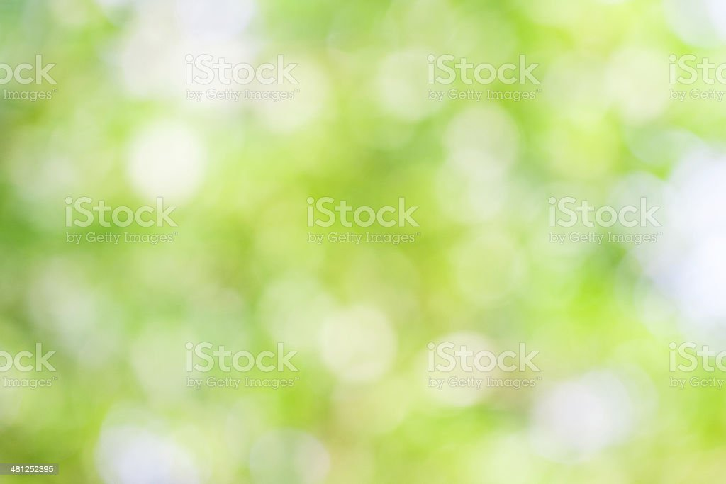 Green leaf bokeh blur for natural background stock photo