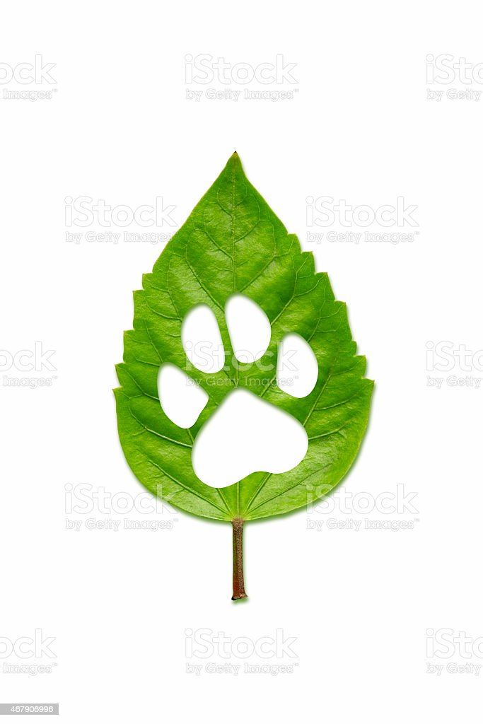 Green leaf carved in the shape of a dog paw stock photo
