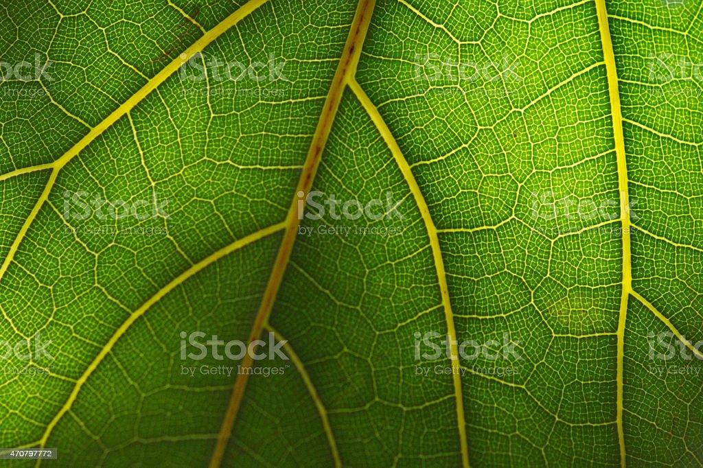 녹색 잎 클로즈업 royalty-free 스톡 사진