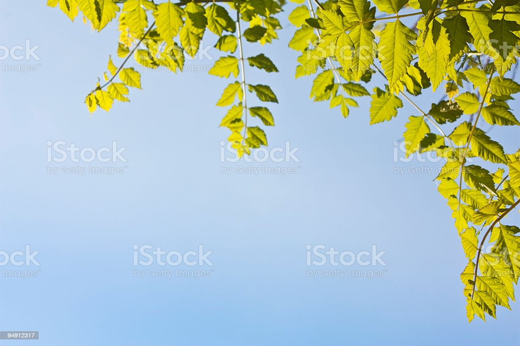 green leaf, creative abstract design background photo royalty-free stock photo
