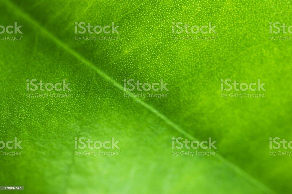 Green leaf detail stock photo
