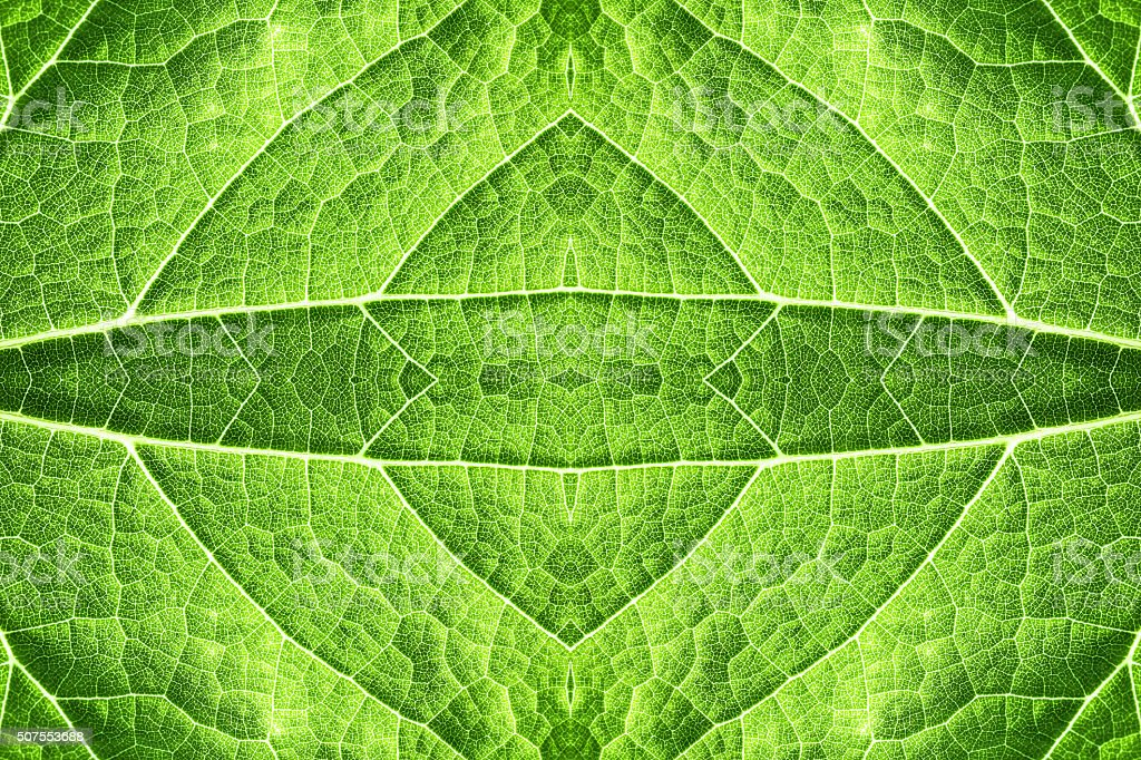Green leaf epidermis pattern background surreal shaped symmetrical kaleidoscope stock photo