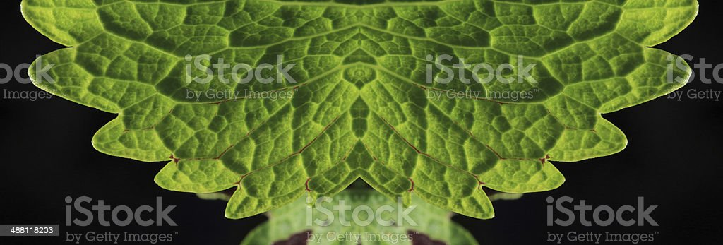Green leaf for background royalty-free stock photo