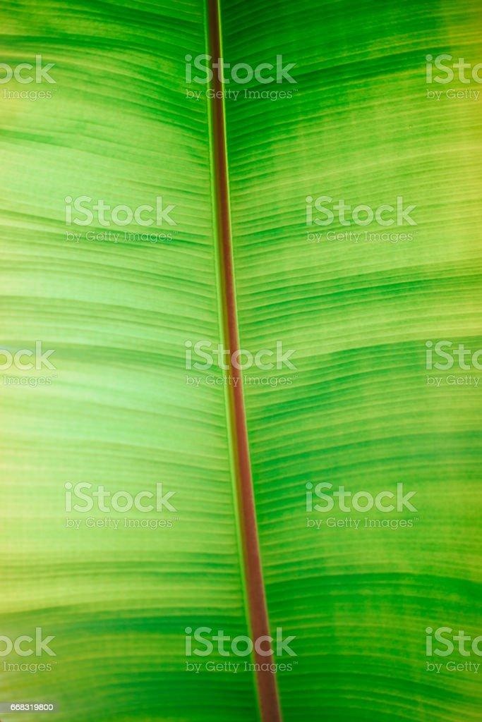 Green Leaf Full Frame stock photo