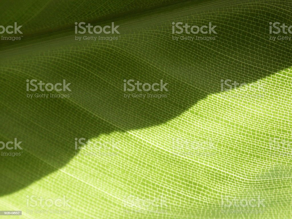 green leaf in close-up royalty-free stock photo