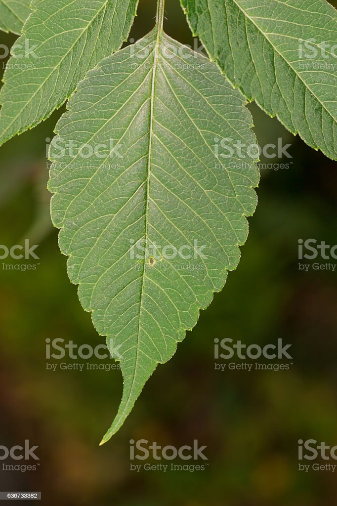 Green leaf in nature blur background. stock photo