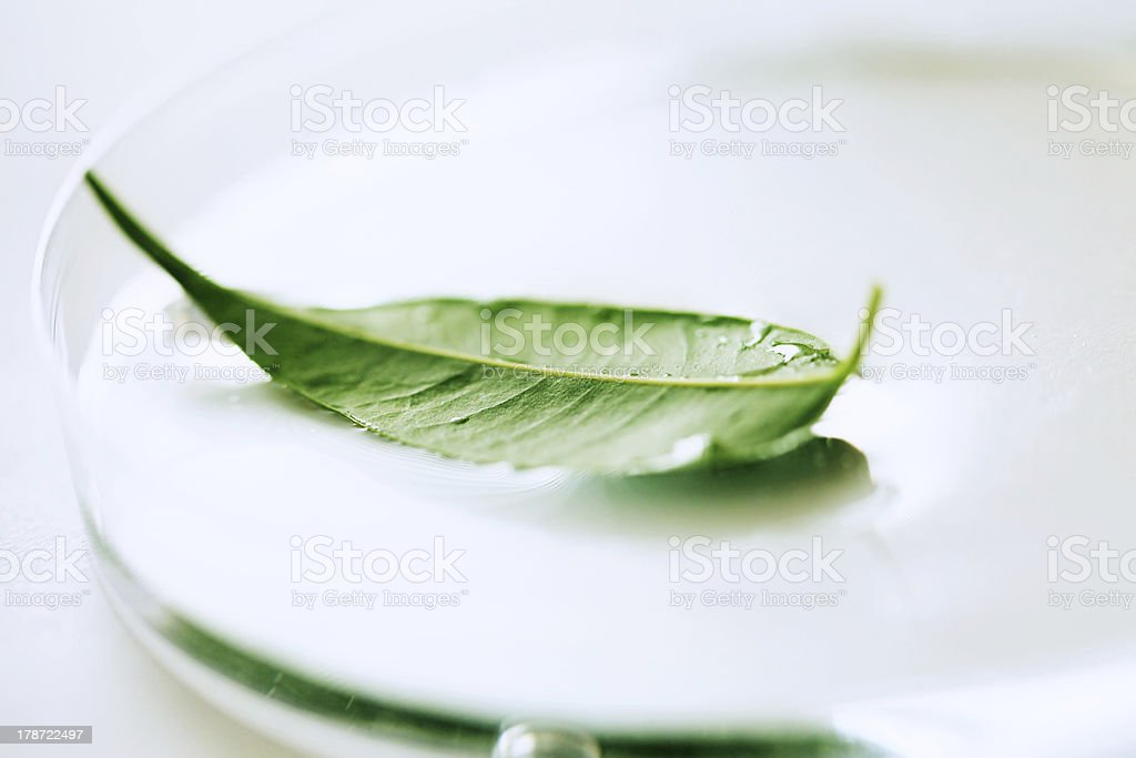 Green leaf in petri dish. stock photo