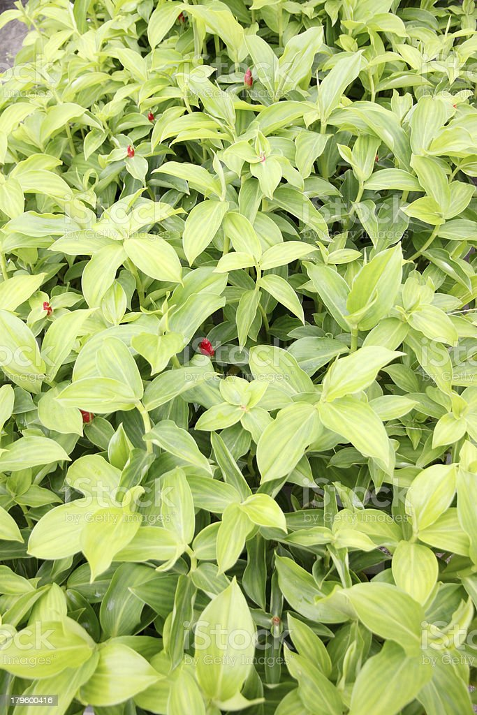 Green leaf in the garden of background. royalty-free stock photo