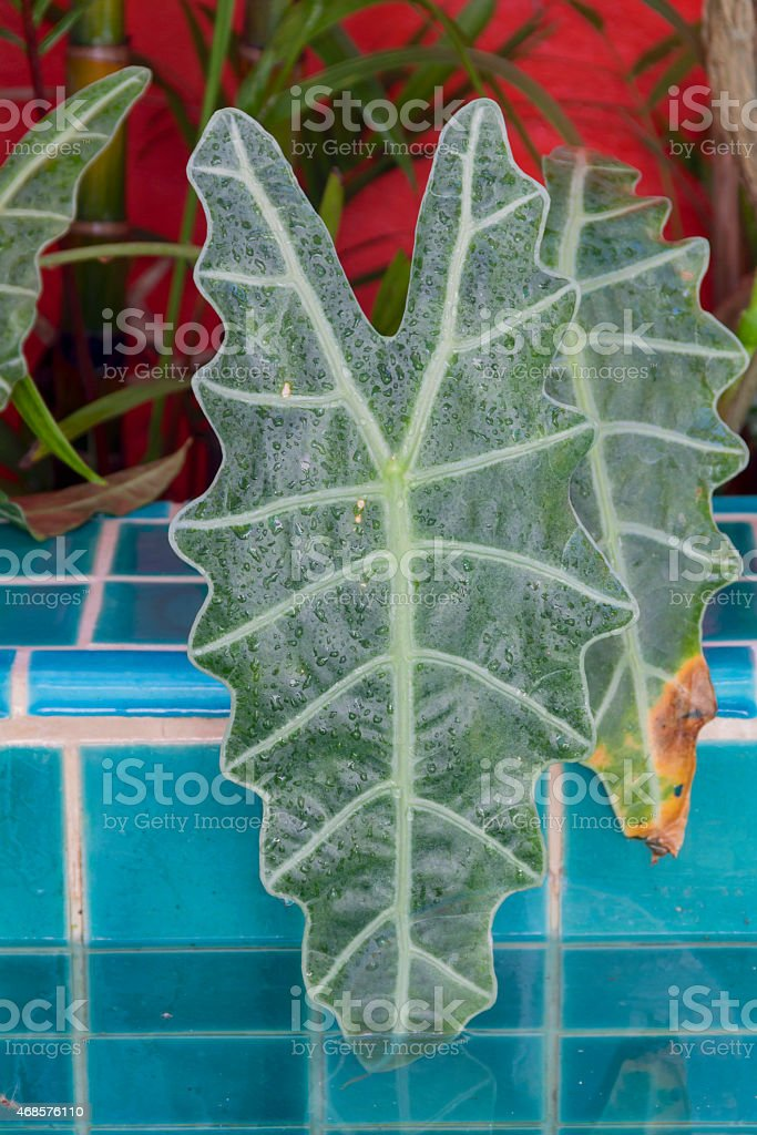 Green leaf in the water royalty-free stock photo
