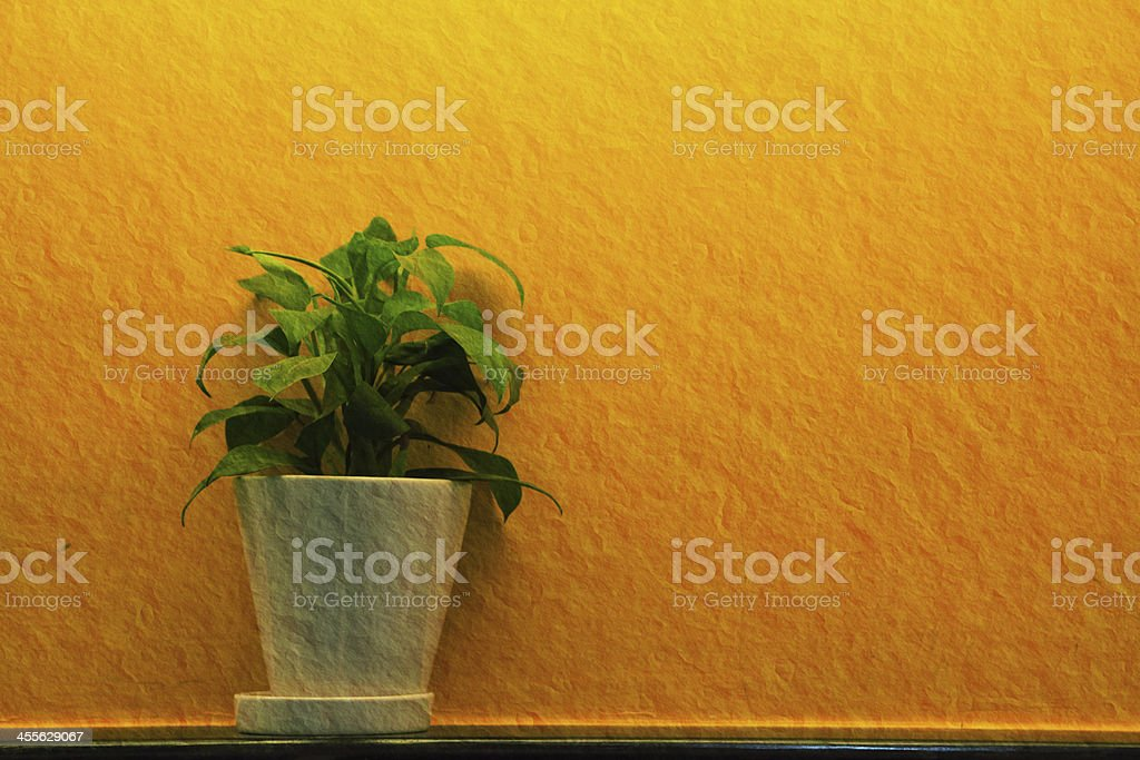 green leaf in white vase royalty-free stock photo