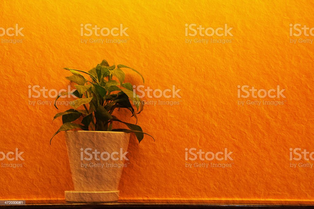 green leaf in white vase royalty-free stock photo
