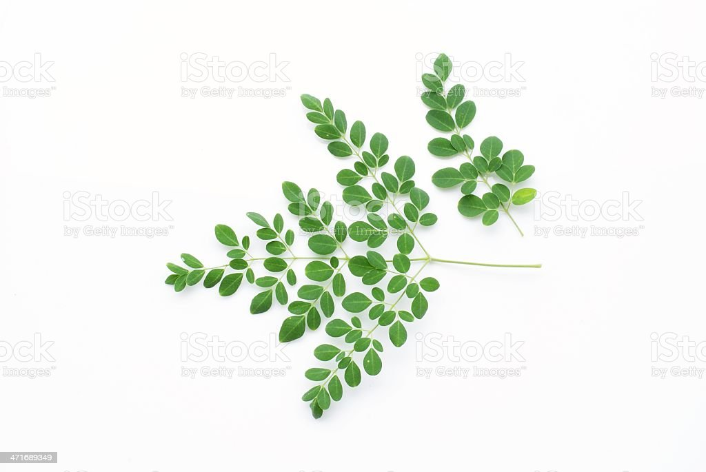 Green leaf isolate on white background royalty-free stock photo