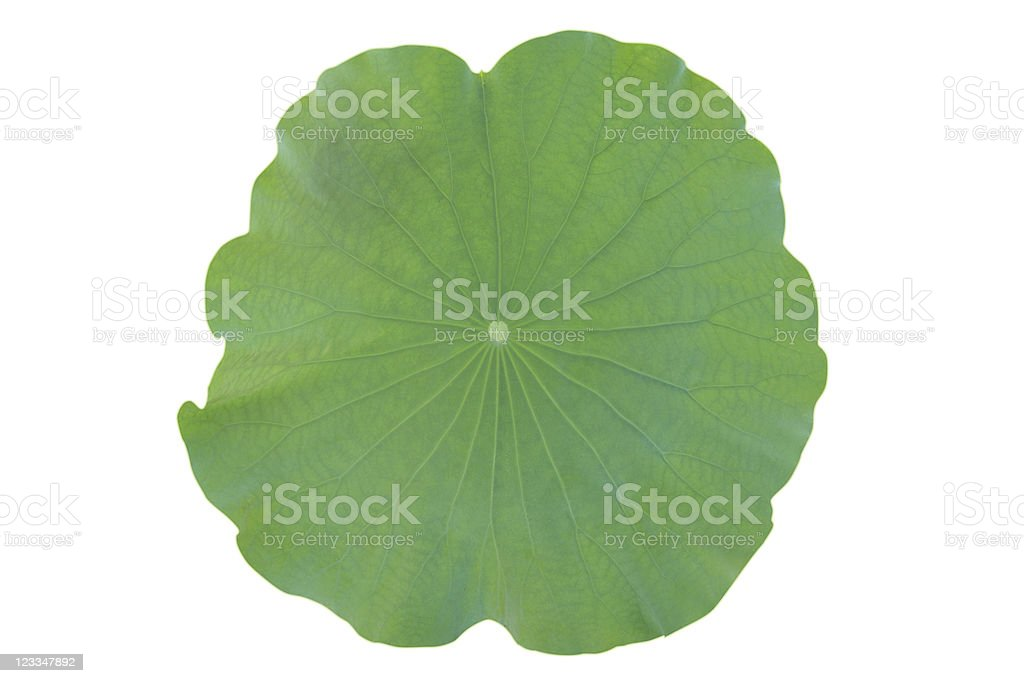 Green leaf, isolated, clipping path included royalty-free stock photo