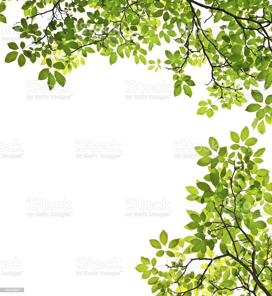 Foglia verde isolato su sfondo bianco foto stock royalty-free