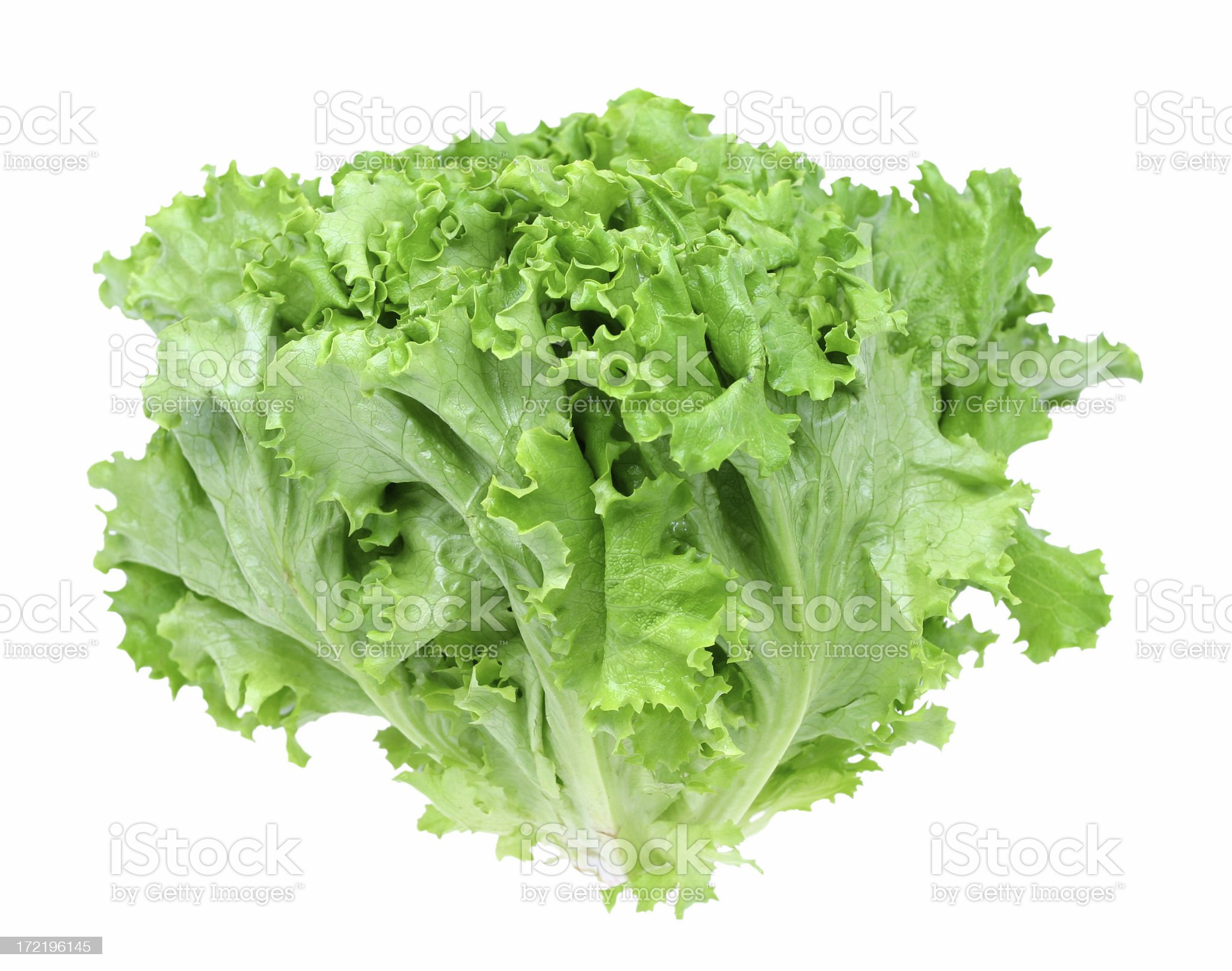 green leaf lettuce royalty-free stock photo