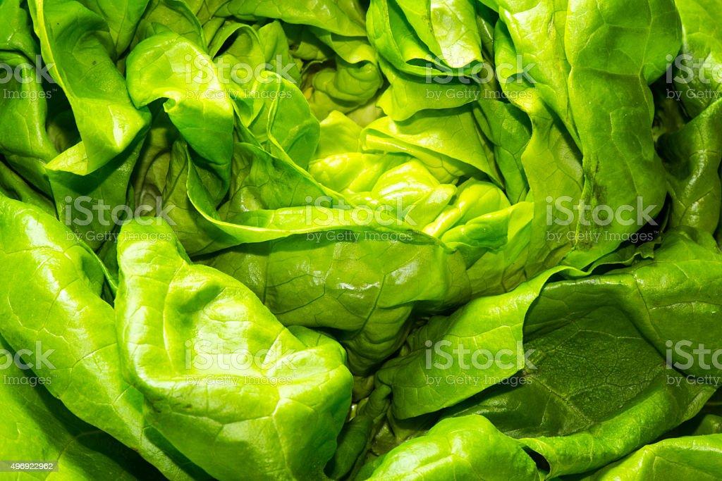 green leaf lettuce stock photo