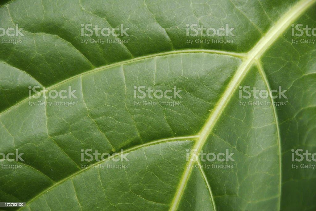 Green Leaf Macro Full Frame Natural Texture stock photo
