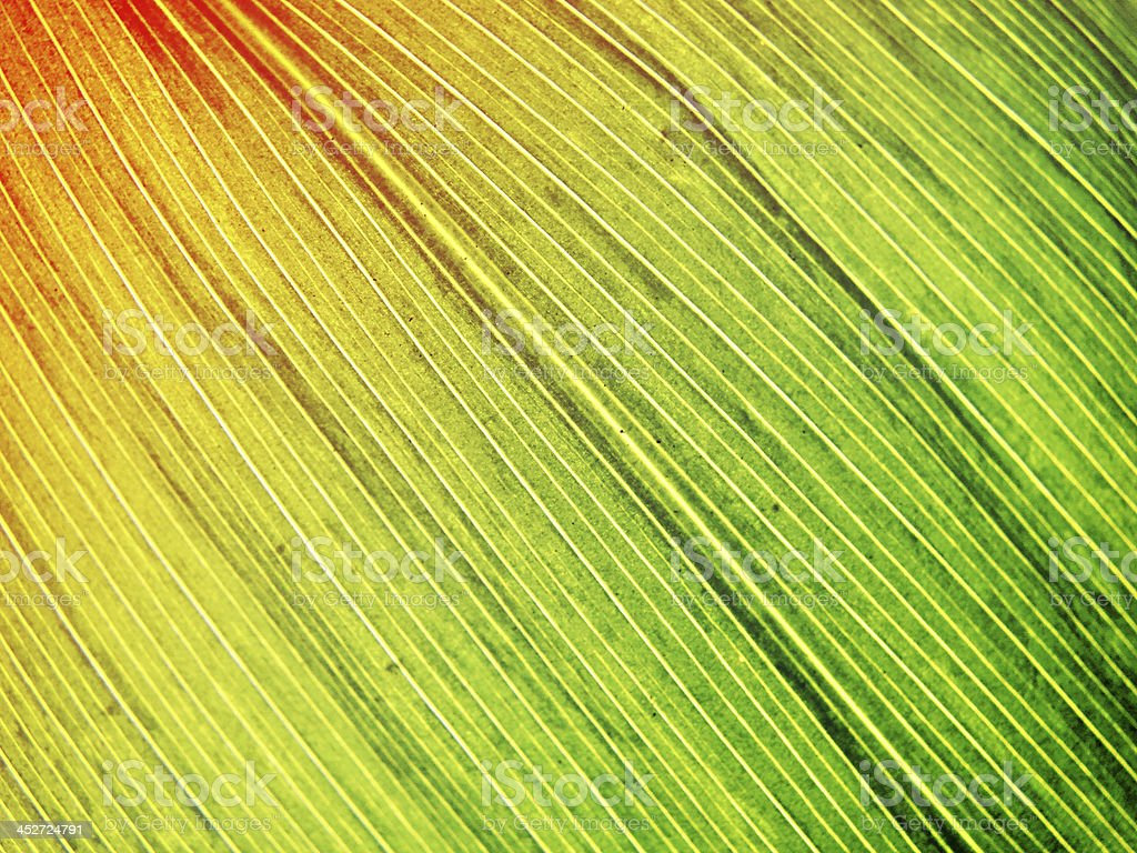 green leaf macro stock photo