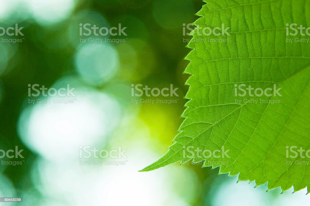 Green leaf macro royalty-free stock photo