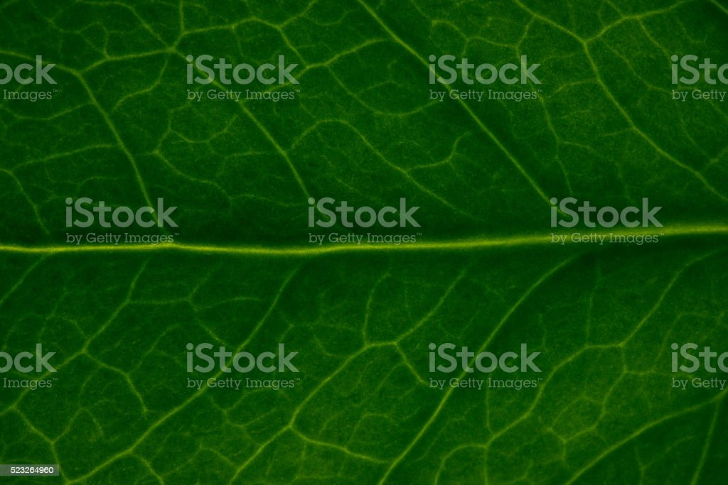 Green Leaf Makro stock photo