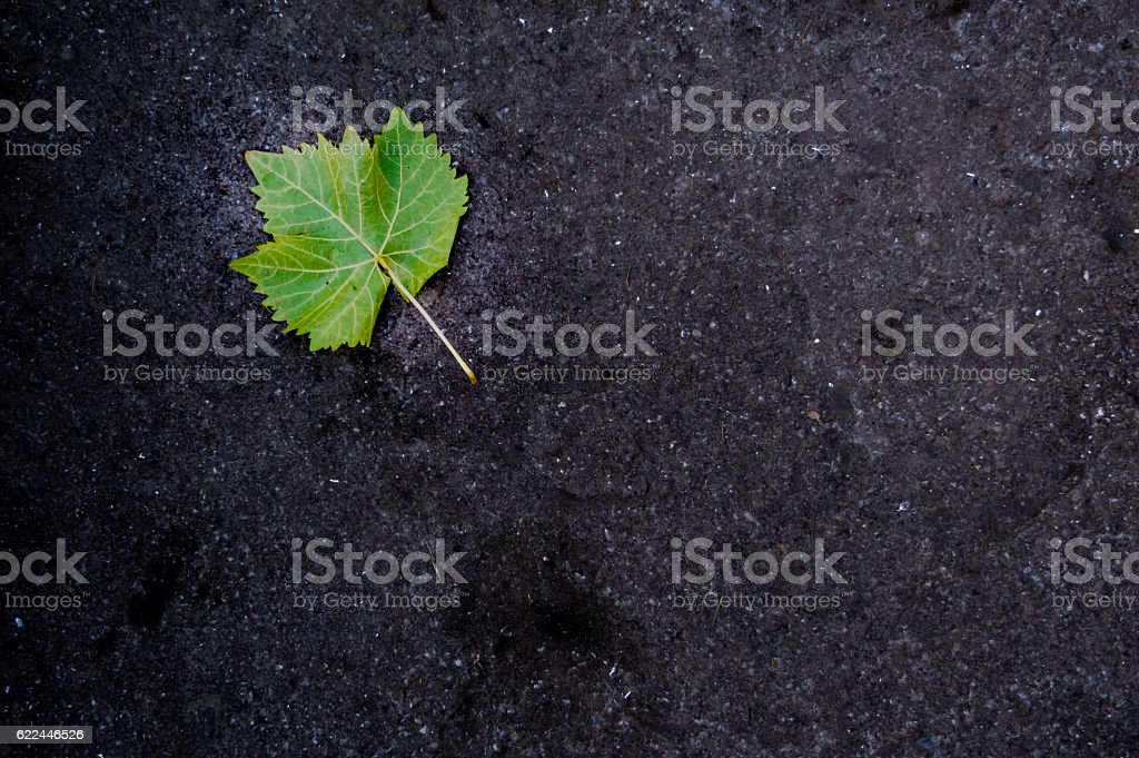 Green Leaf on a Black Road stock photo