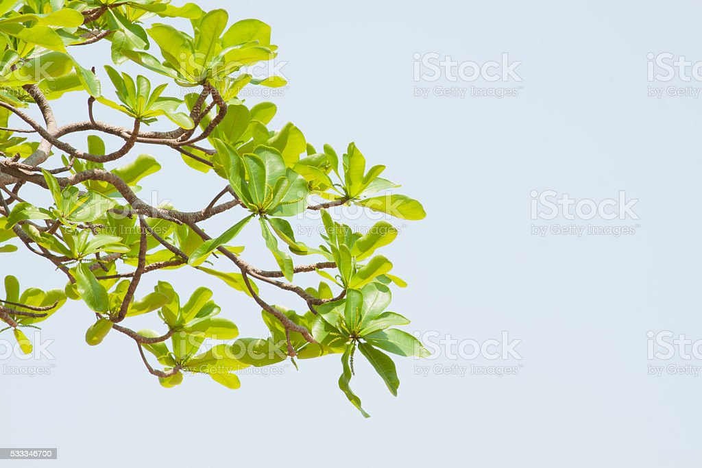 Green leaf on blue sky background royalty-free stock photo