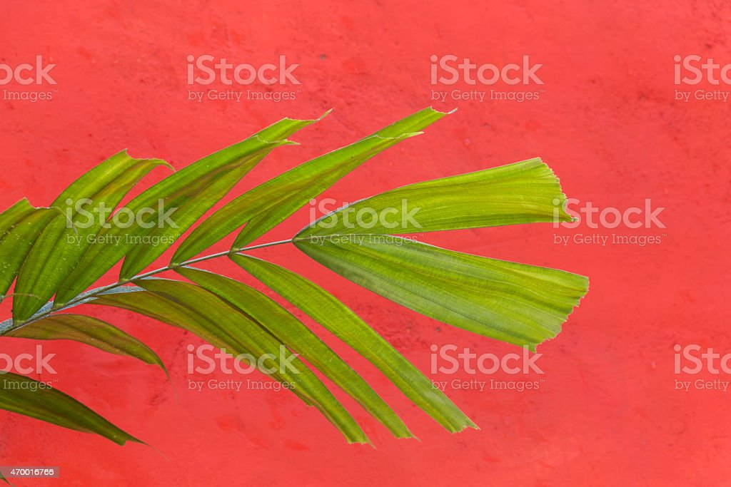 Green leaf on red wall royalty-free stock photo