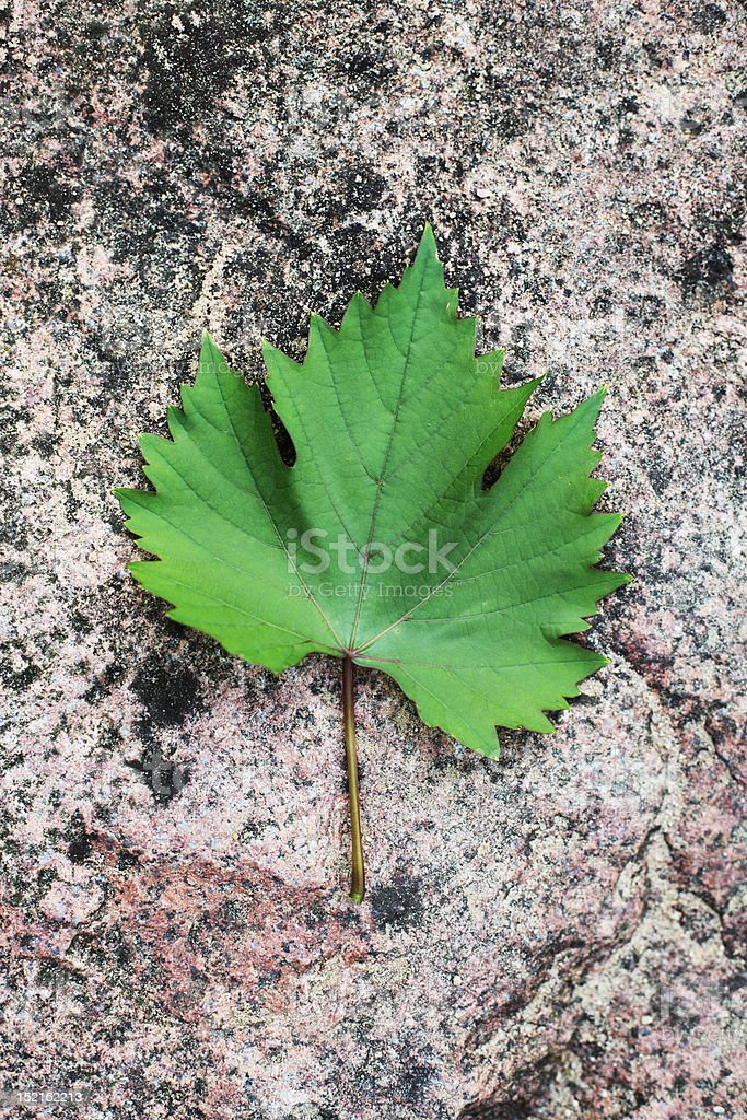 green leaf on the stone royalty-free stock photo