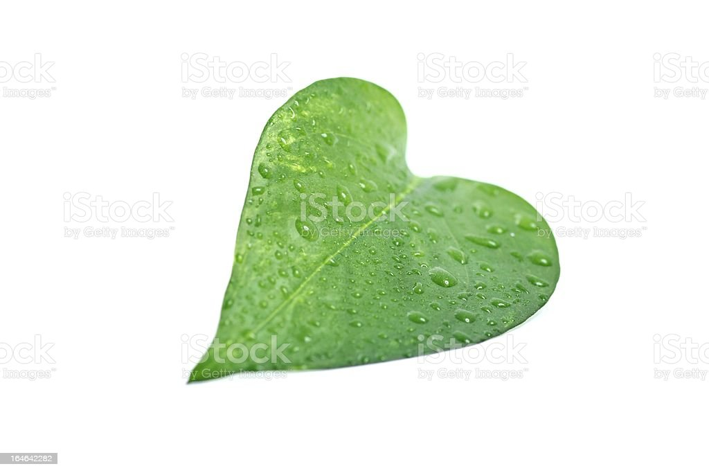 Green leaf on white background royalty-free stock photo