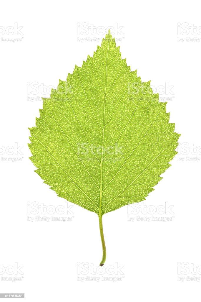 green leaf on white royalty-free stock photo