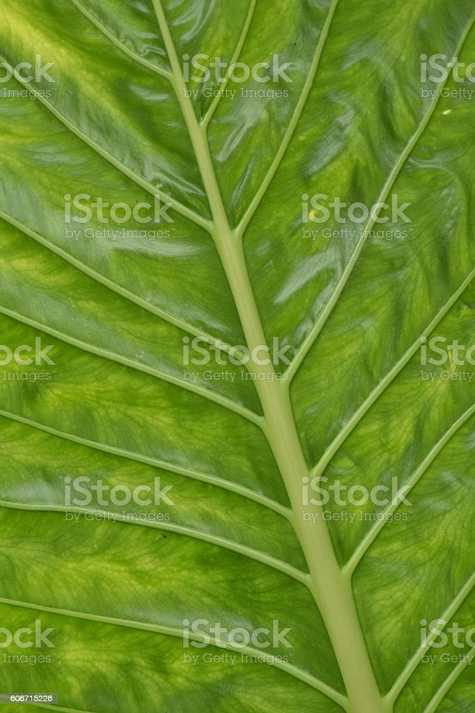Green leaf pattern stock photo
