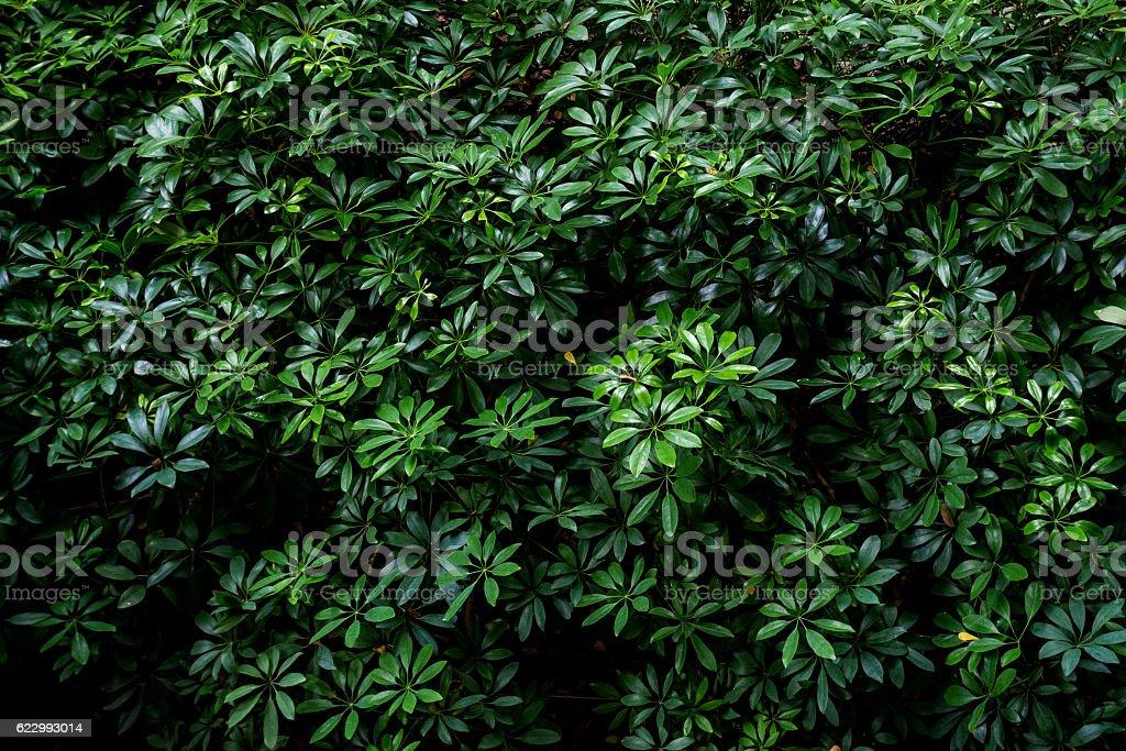green leaf pattern stock photo