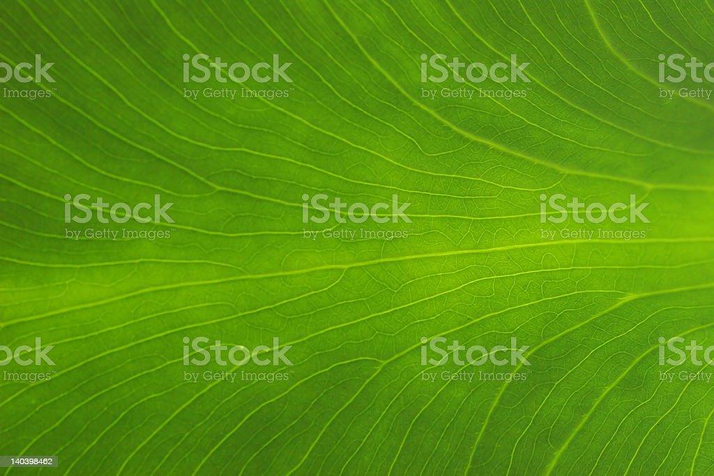 Verde Leaf foto de stock libre de derechos