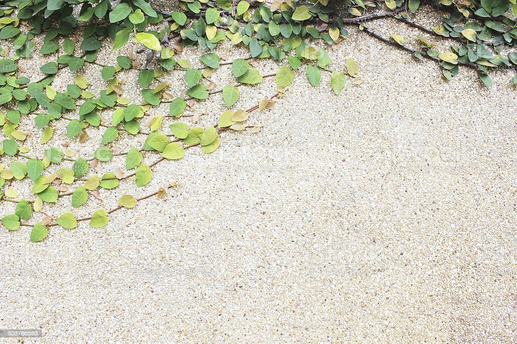 green leaf plant with concrete wall background royalty-free stock photo