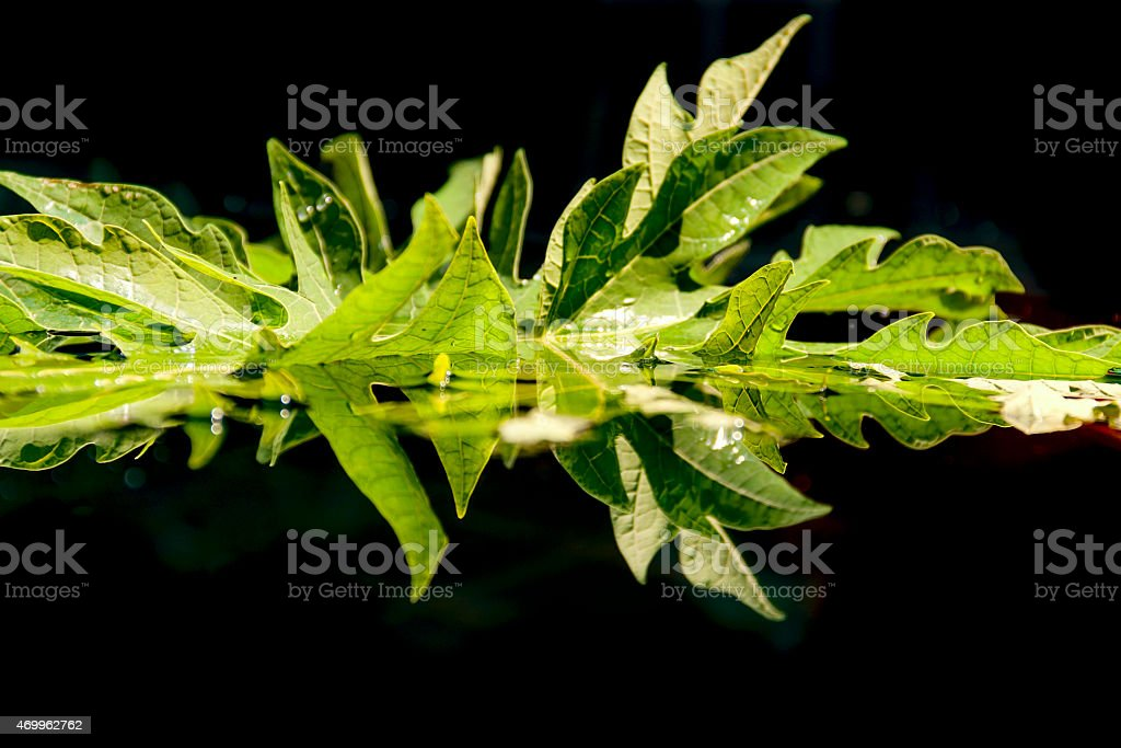 Green leaf reflection on water royalty-free stock photo