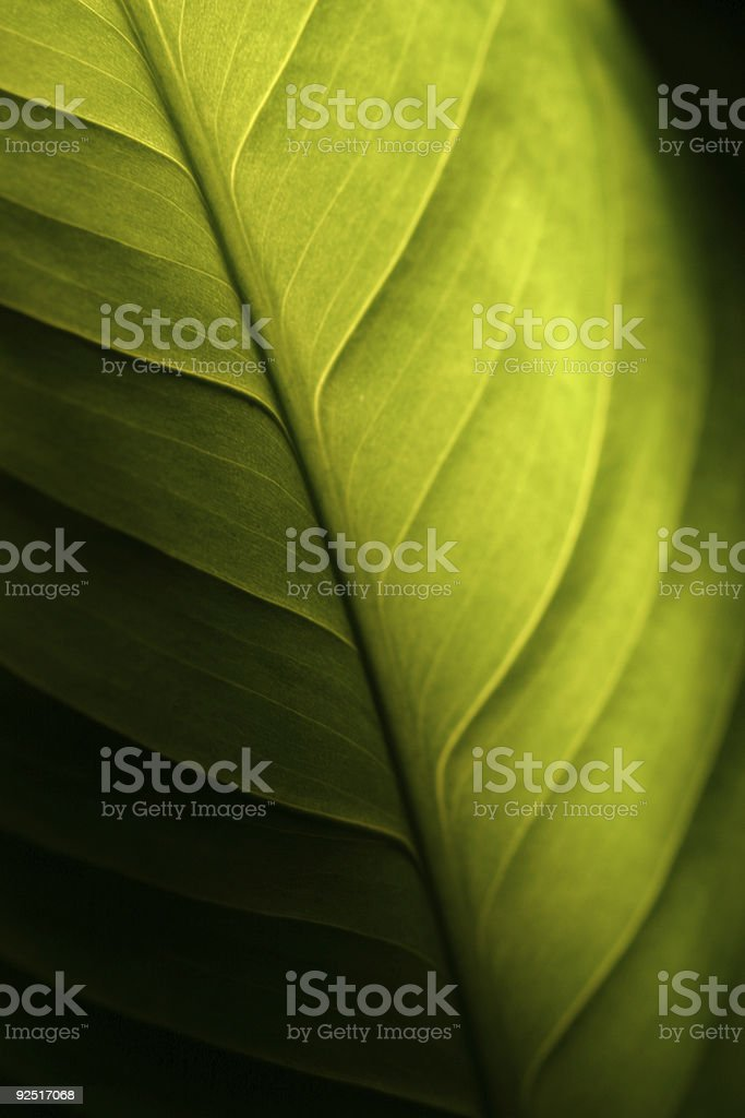 Green Leaf Shadowed stock photo