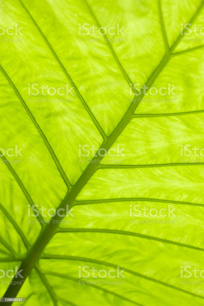 Green leaf surface royalty-free stock photo
