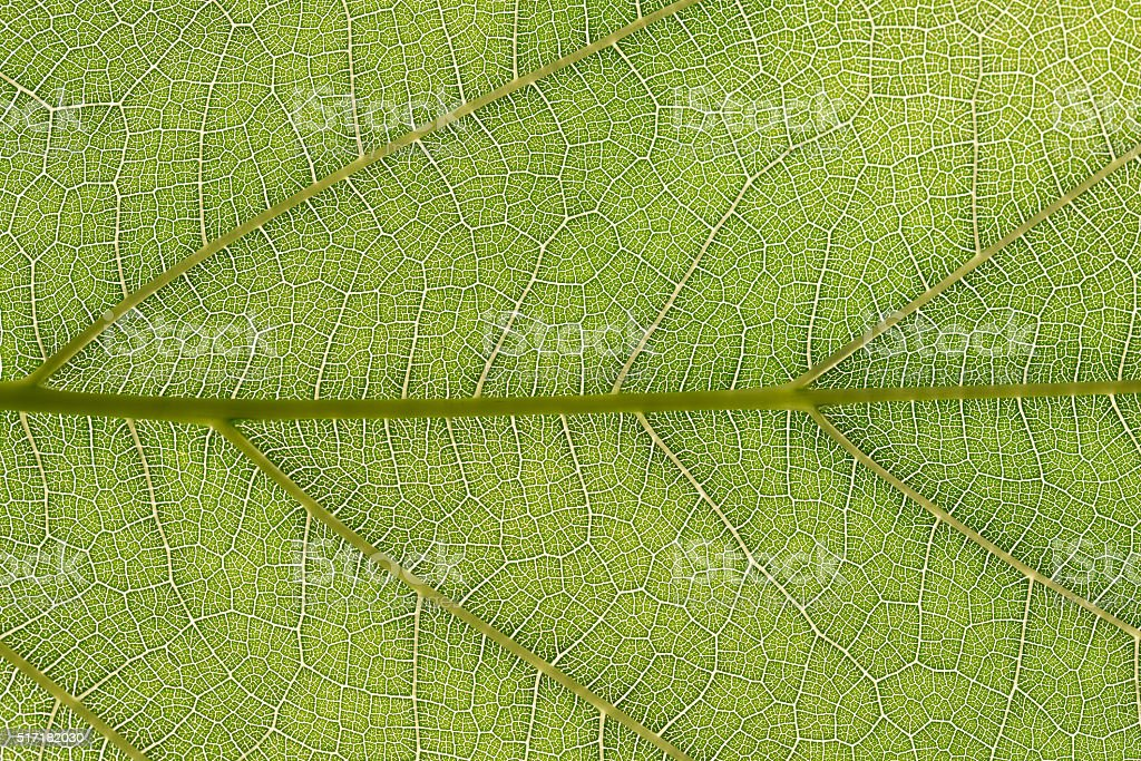 green leaf texture for background stock photo