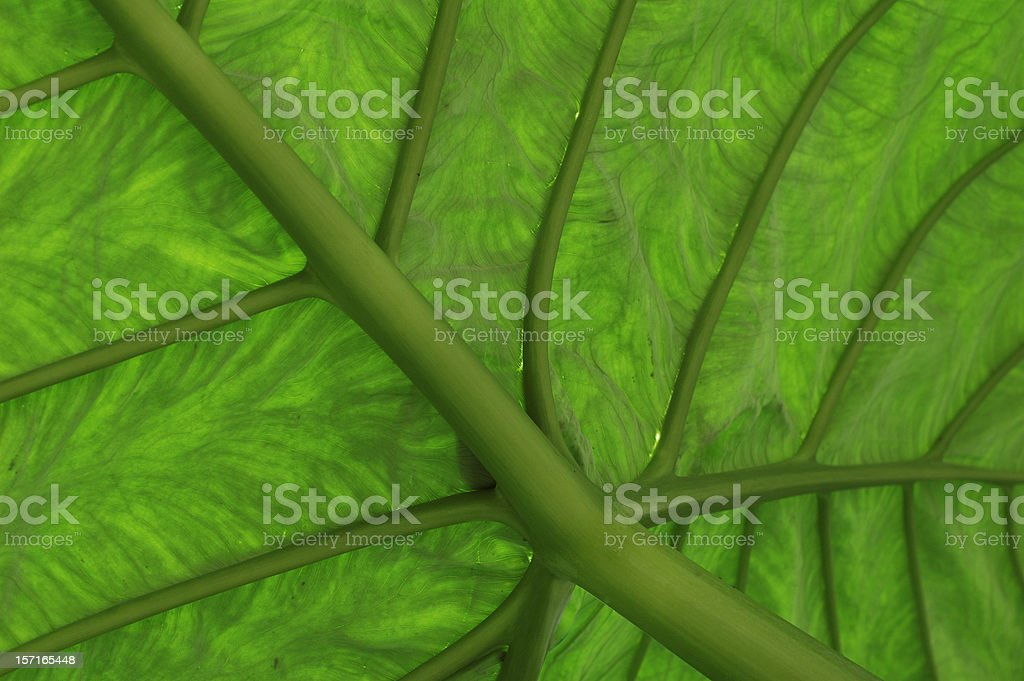 Green Leaf Textures and Patterns stock photo