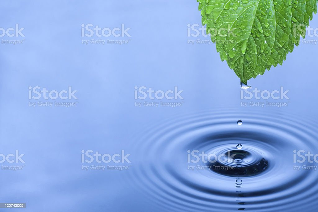 Green leaf water drops stock photo