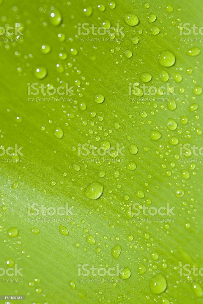 Green leaf waterdrops royalty-free stock photo