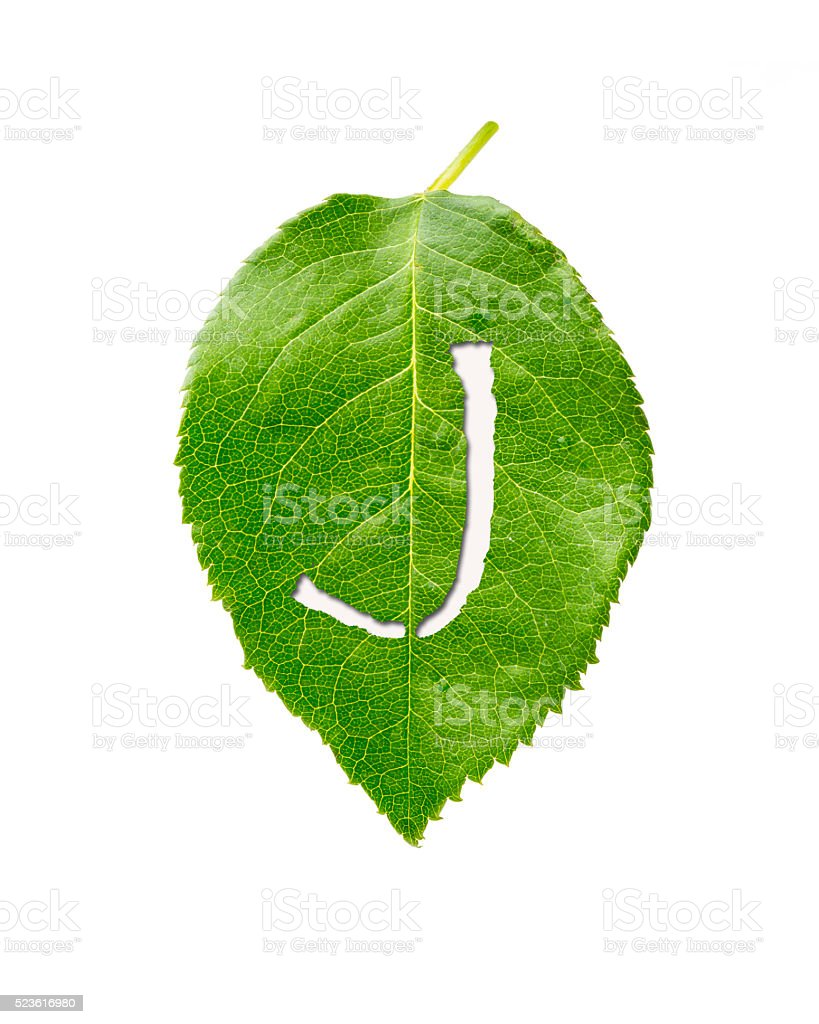 green leaf with Lettr J stock photo