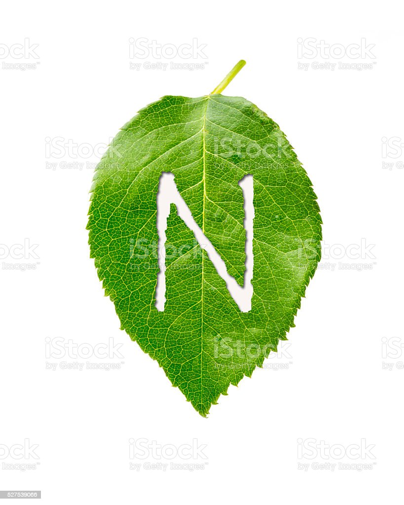 green leaf with N stock photo