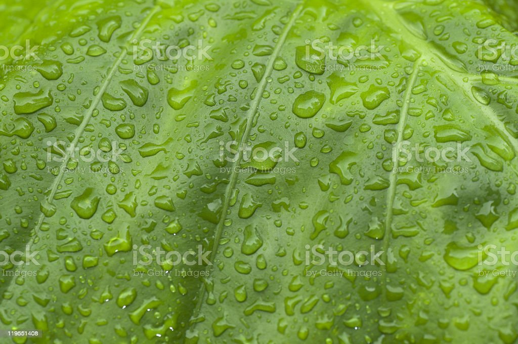 Green leaf with rain droplets stock photo