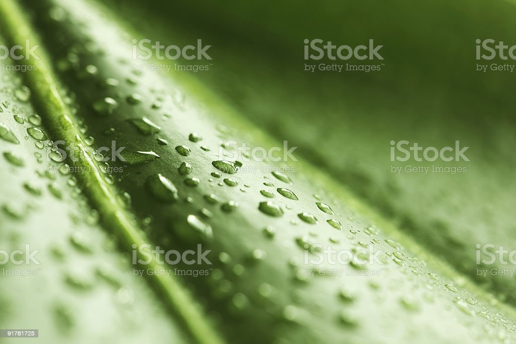 Green leaf with rain droplets royalty-free stock photo