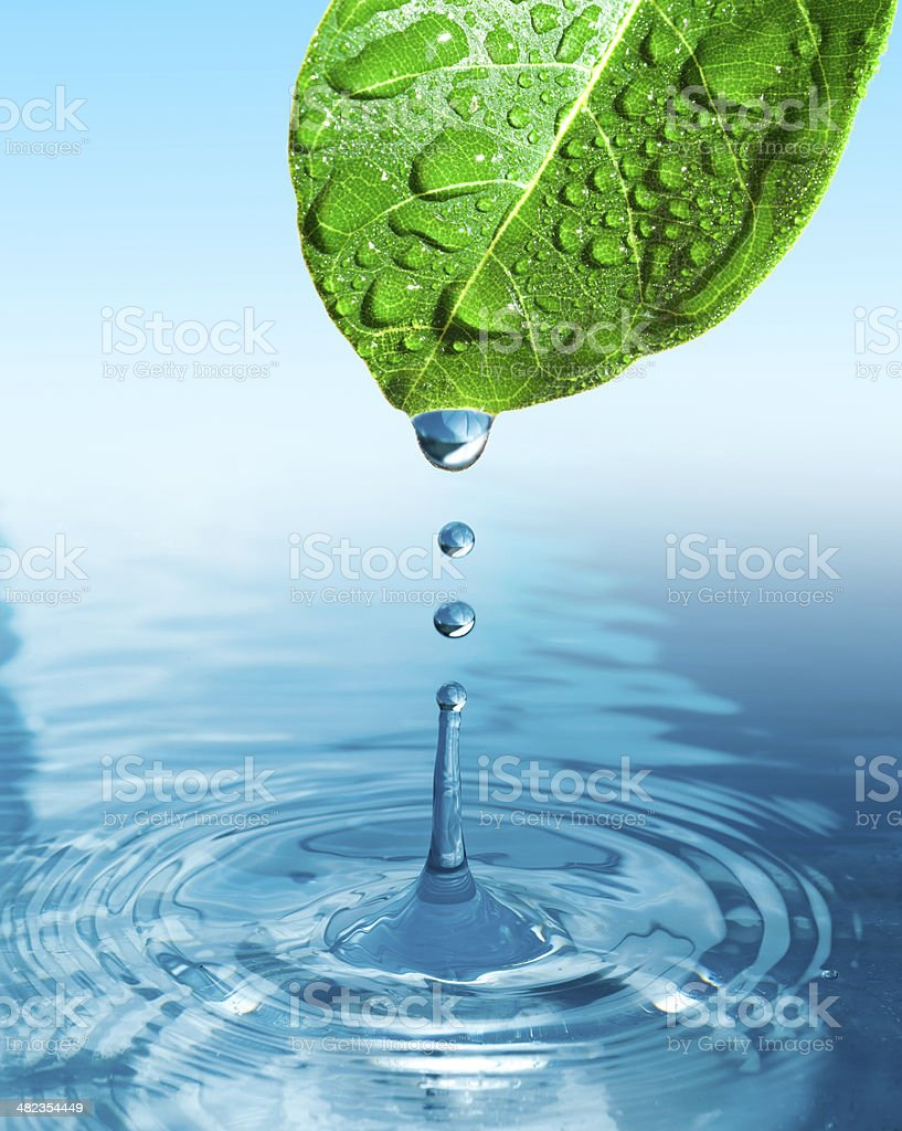 green leaf with water drop ans splash isolated o white stock photo