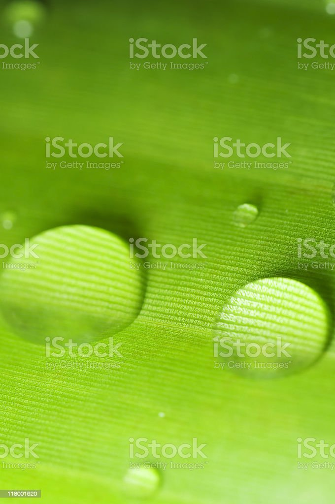 Green leaf with water drop or dew royalty-free stock photo